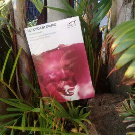 el lobo estepario … hermann hesse … 301 paginas … mirlo pocket